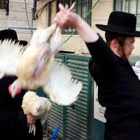 Jews make chickens giddy