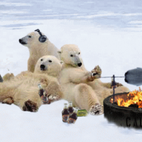 Polar bears not dying enough for global warming religion