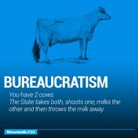 Two Cows: Bureaucratism