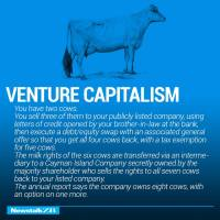 Two Cows: Venture Capitalism