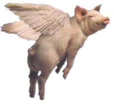 flypig